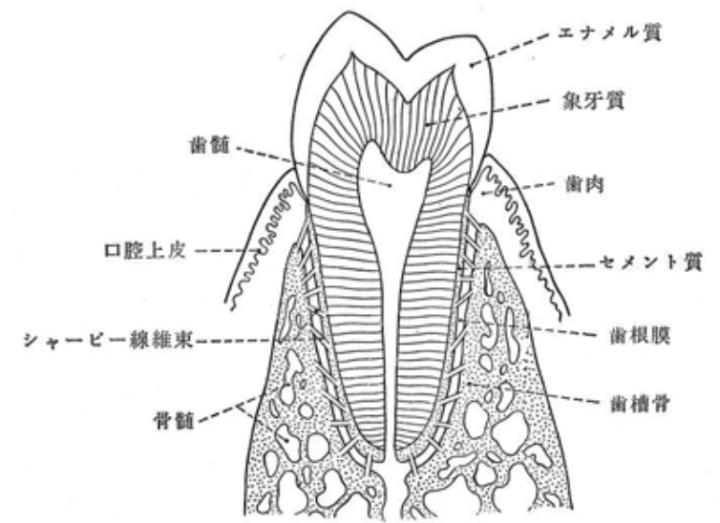 一般歯科・拡大治療・抜歯の画像